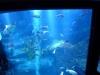 Tokyo Sky Tree Aquarium