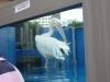 Sunshine Aquarium, Tokyo