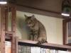 Cat café in Tokyo