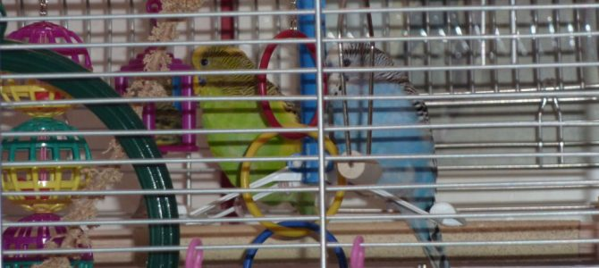 New Bird